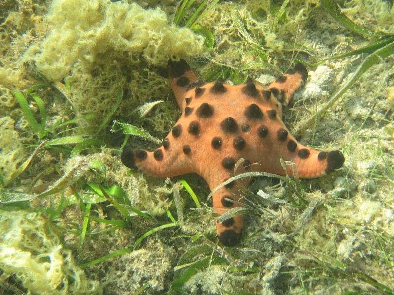 Mr Starfish